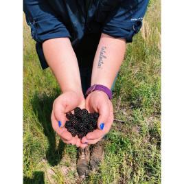Dewberries Liz Rebstad