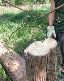 A clean stump-shot!